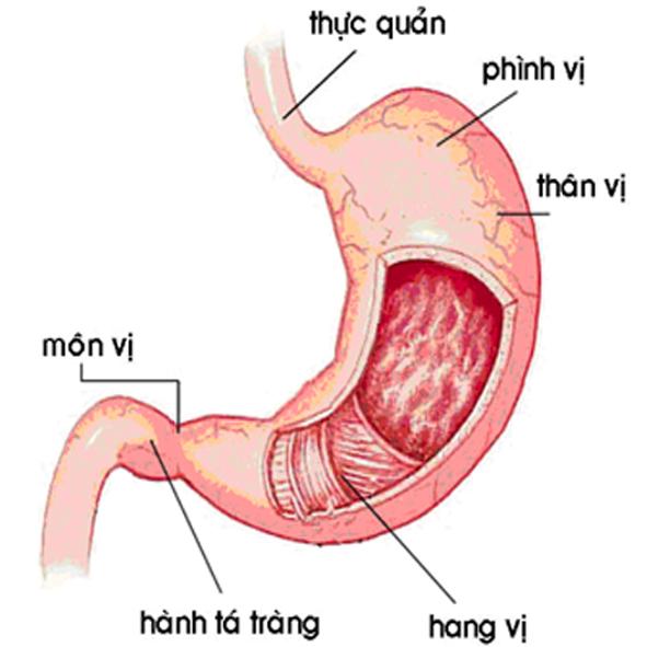 Kiến thức cần biết về bệnh đau dạ dày