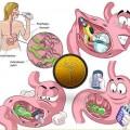 04-Helicobacter pylori