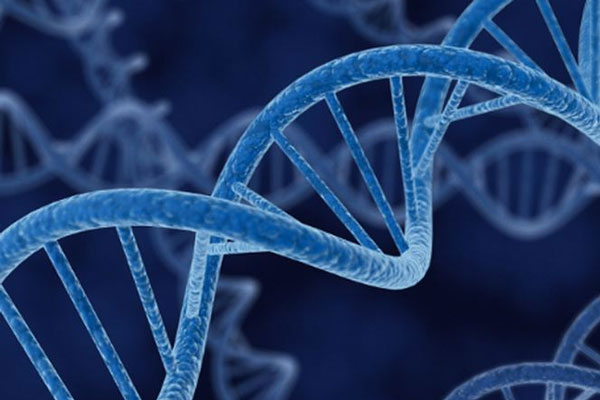 Đau dạ dày có tính di truyền không? 1
