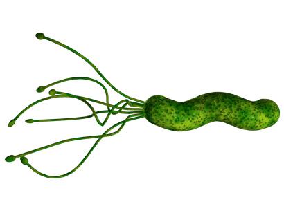 Điều gì giúp vi khuẩn Hp tồn tại dai dẳng trong dạ dày 1