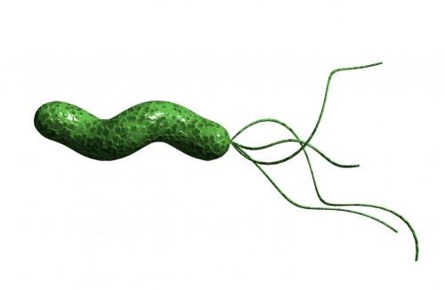 Helicobacter pylori (Vi khuẩn Hp) 1