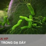 Vi khuẩn Hp trong dạ dày là gì?