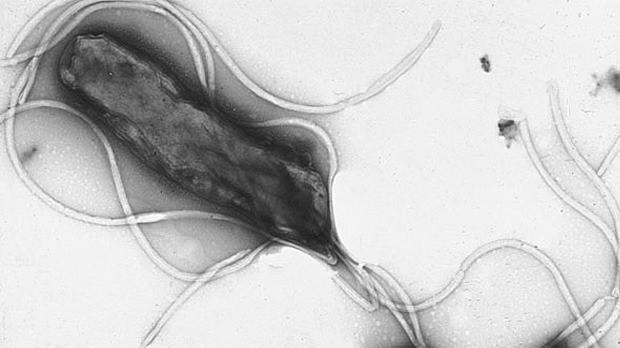 Sự sống của một vi khuẩn: H.pylori và Ung thư dạ dày 1