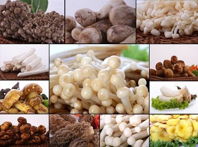 Các loại nấm 1