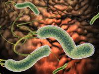 Khi nào cần diệt vi khuẩn HP?
