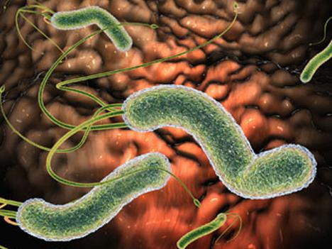 Khi nào cần diệt vi khuẩn HP? 1