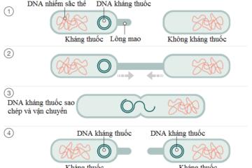 Vi khuẩn Hp kháng thuốc lây truyền như thế nào