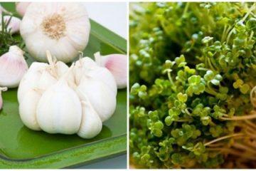5 loại siêu thực phẩm chống lại bệnh Ung thư dạ dày