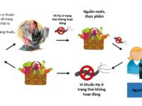 Liệu vi khuẩn Hp có lây nhiễm trong quá trình điều trị không?